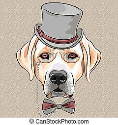 labrador, razza, cane, vettore, hipster, serio, cartone animato, cane da riporto