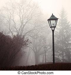 lampada, nebbia, parco, strada, foresta