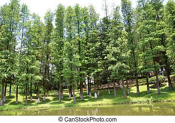 lato, lago, albero, pino