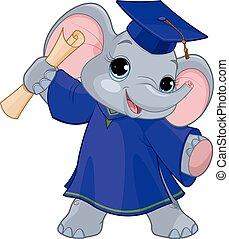 laureati, elefante