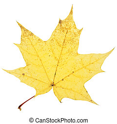 leaf., autunno