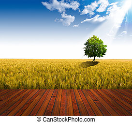 legno, campo, frumento, pavimento