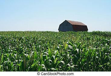 legno, cornfield, verde, granaio