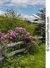 legno, fiore, rododendro, vecchio, recinto