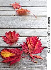 legno, foglie, cadere, acero, panca