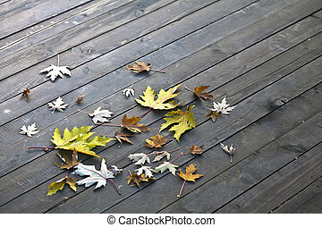 legno, foglie, pavimento