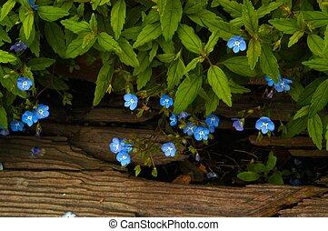 legno, wildflowers, &