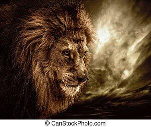 leone, cielo tempestoso, contro