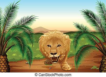leone, giungla