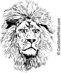 leone, grande, criniera