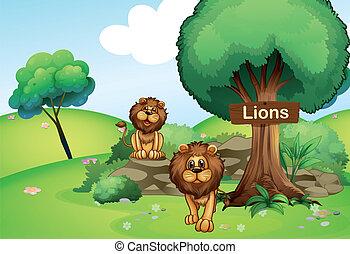leoni, legno, cartello, due, foresta
