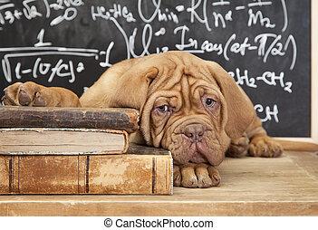 libri, cucciolo, mucchio