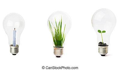 lightbulb interno, crescente, pianta