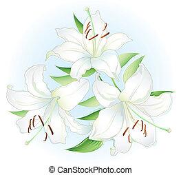 lilly, bianco