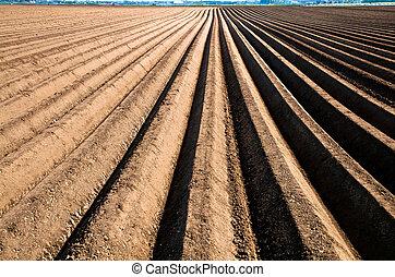 linea, asparago