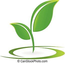logotipo, vettore, salute, mette foglie, natura