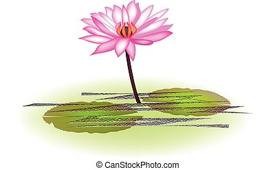loto, fiore dentellare, logotipo