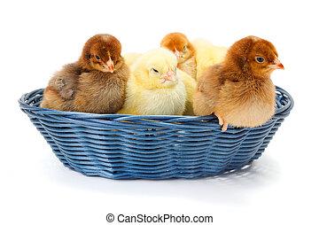 lotti, neonato, polli, cesto, vimine
