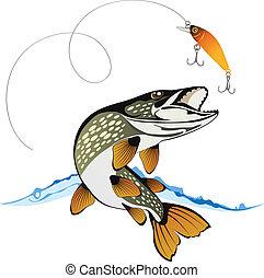 luccio, allettare, pesca
