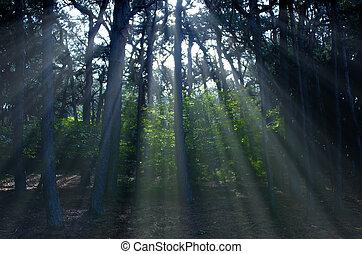 luce, albero, raggio