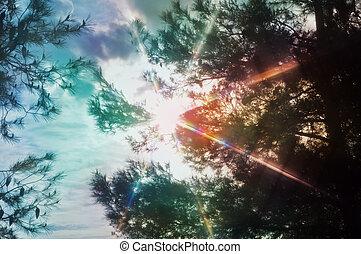 luce, attraverso, spettro, albero, pino