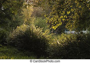 luce, dietro, raggi, albero, park.