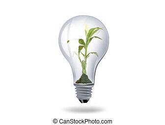 luce, pianta, dentro, bulbo