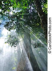 luce sole, natura