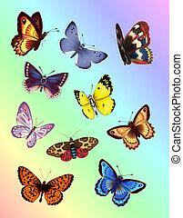 luminoso, farfalle