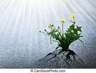 luminoso, vita, speranza