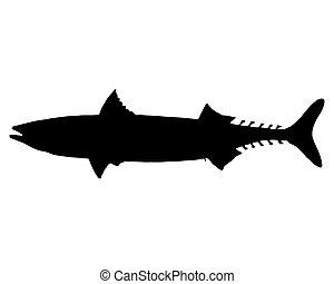 maccarello atlantico, silhouette