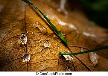 macro, gocce, immagine, albero quercia, foglia, acqua