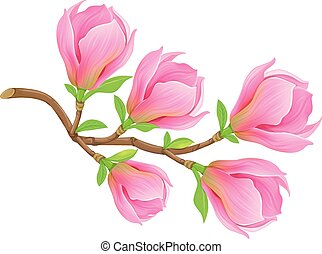 magnolia, primavera, ramo, rosa