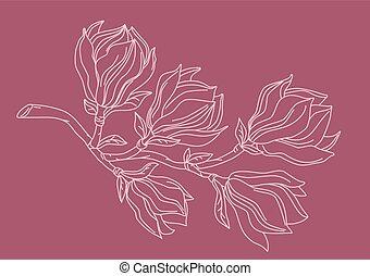 magnolia, ramo, drawing.