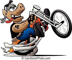 maiale, vettore, motociclista, cartone animato, wheelie, illustrazione, motocicletta, schioccare