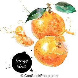 mandarino, mano, acquarello, fondo, disegnato, bianco, pittura