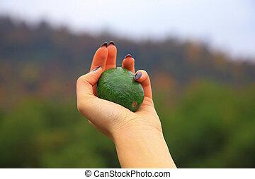 mani, donna, verde, avocado