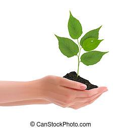 mani, presa a terra, giovane pianta
