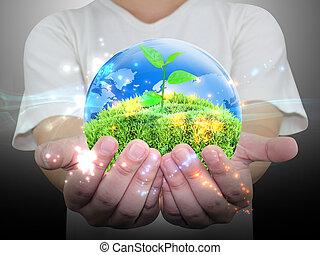 mano, pianta verde