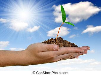 mano, verde, crescente, pianta