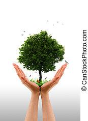 mano, vivo, albero, -