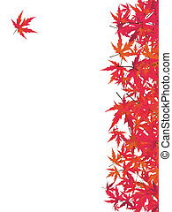 maple., eps, giapponese, rosso, 8
