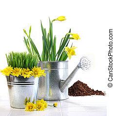 margherite, vaso, lattina, irrigazione, erba, giardino