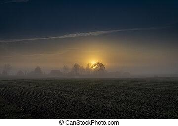 mattina, campo, tramonto, presto