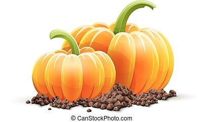 maturo, suolo, verdura, autunno, raccogliere, zucca