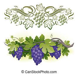 maturo, &, -, vite, illustrazione, calligraphic, vettore, decorarative, uva