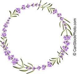 mazzo, lavanda, sfondo bianco, fiori