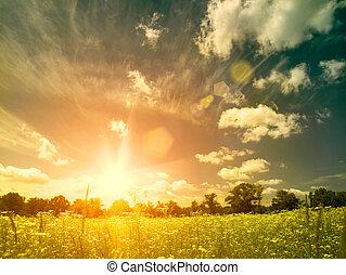 meadow., estate, bellezza naturale, sopra, sfondi, luminoso, tramonto, selvatico, camomilla, fiori