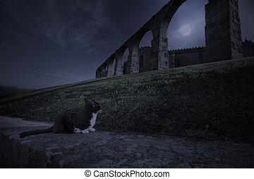medievale, misterioso, gatto