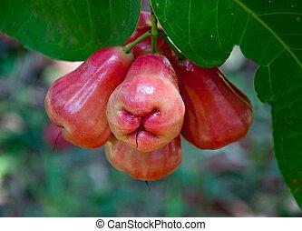 mela, giardino, albero, rosa